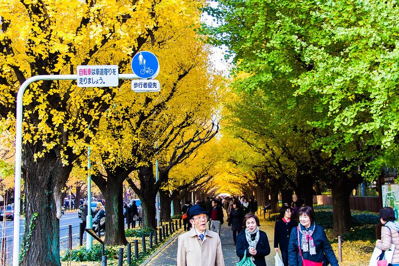 ginkgo avenue (aka icho namiki) - 5