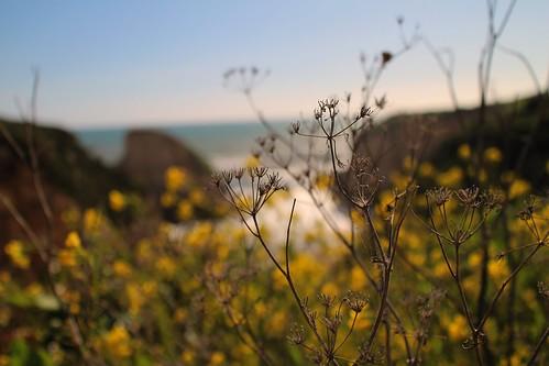 california centralcoast sharkfincove