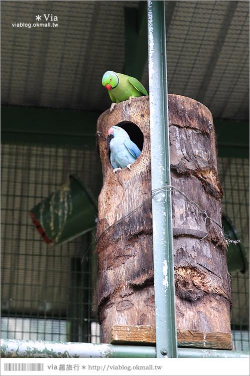 【新竹景點推薦】森林鳥花園~親子旅遊的好去處!在森林裡鳥兒與孩子們的樂園43