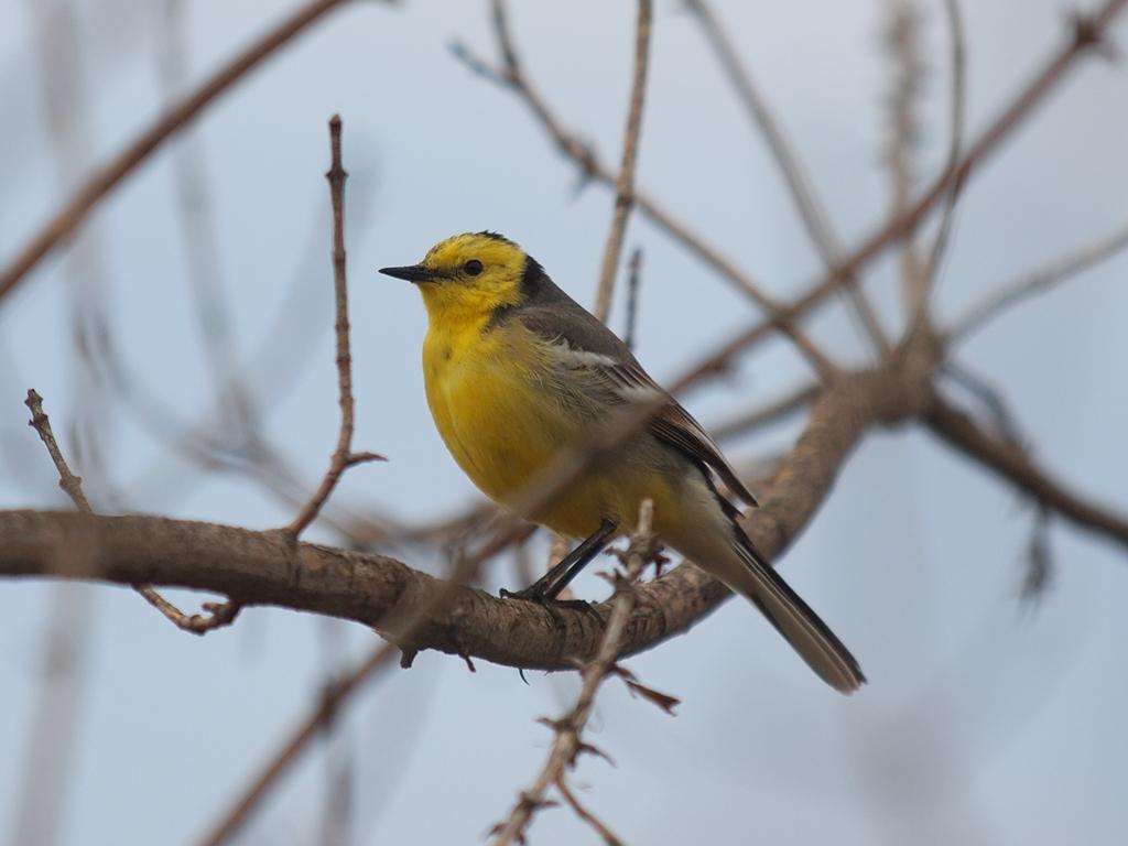 Картинки птицы псковской области