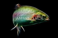 Rainbow trout fractal
