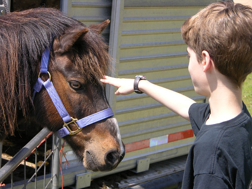 Linden hills 2014 pony attraction