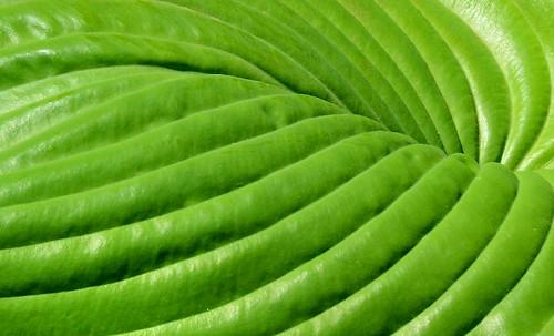 Leaf Architecture
