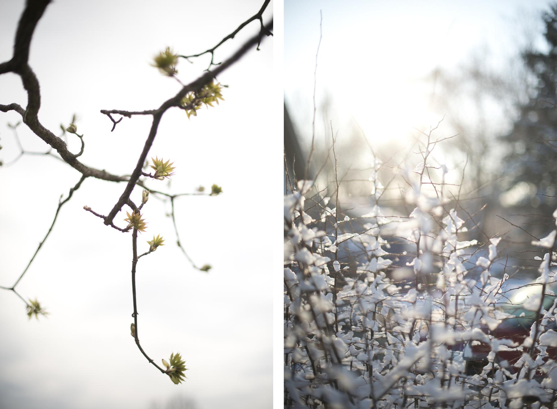 _DSC7023_april snow