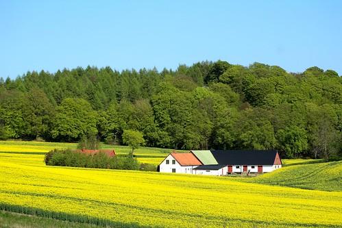 field yellow spring sweden farm tracks fav20 raps skåne rapeseed fav10 vår gård fält