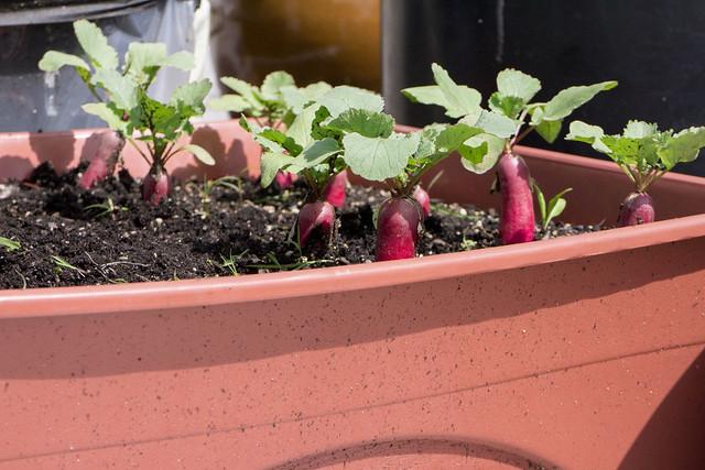 Garden Update 5_25_14