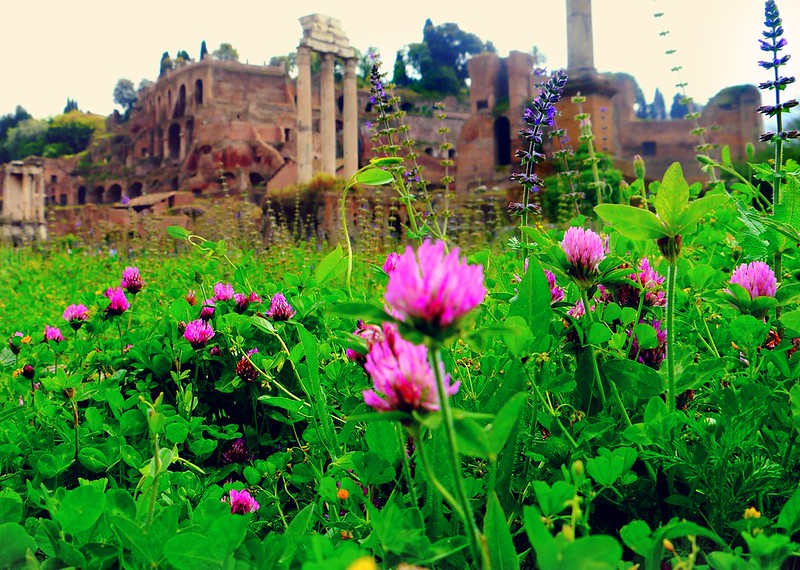 flowers in the roman forum