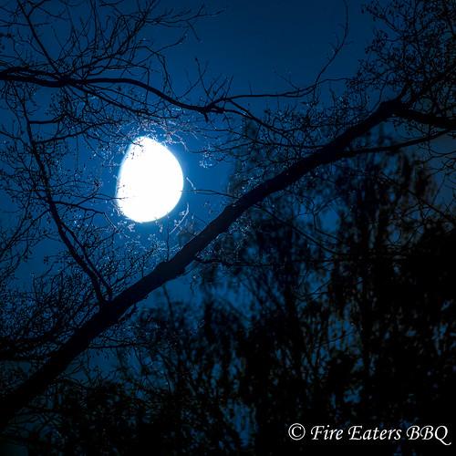 Mond zwischen toten Bäumen