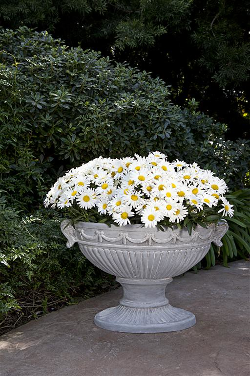 Oval European Ribbon Urn
