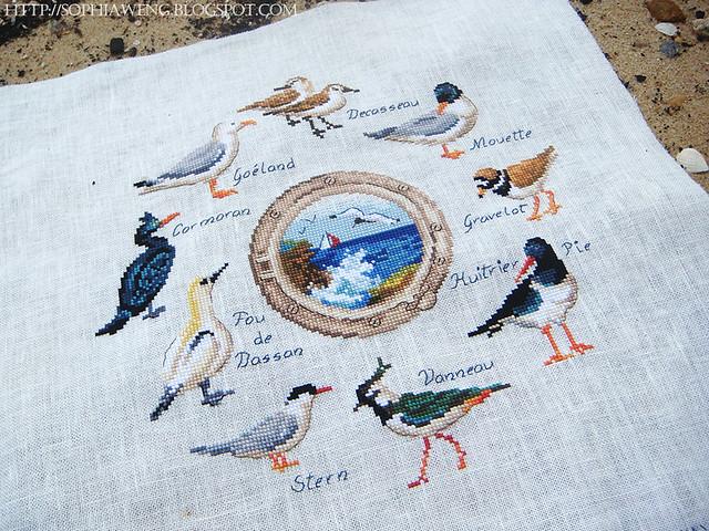 Beaux oiseaux des mers