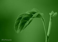 0073_Fresh Green Leaves