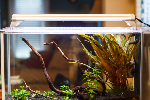 Finnex FugeRay Planted + mounted on Fluval Spec V Aquarium