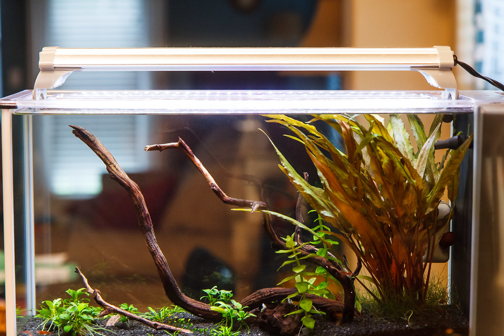 Options For Fluval Spec Light Upgrade