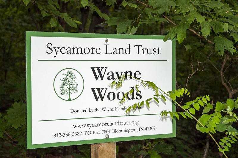 Wayne Woods