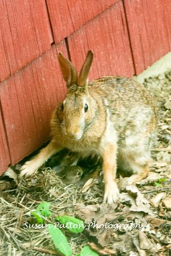 wMama_Bunny
