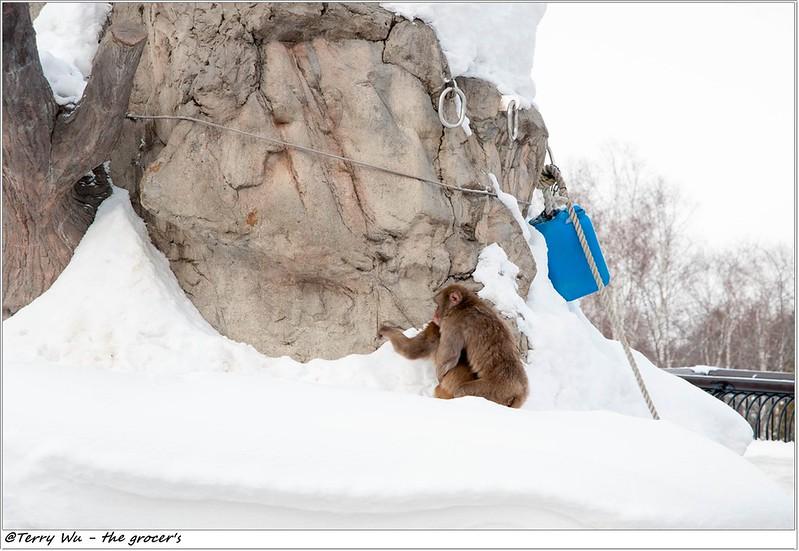 Day5 - 旭山動物園 - 企鵝散步-44