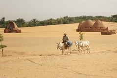 The water table is falling in Egypt's desert oases, raising questions of sustainability_Cam McGrath