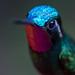 Hello | Hummingbird by Thomas Heaton