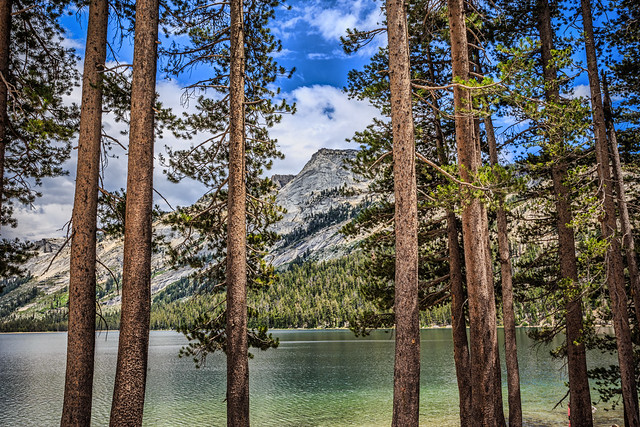 Tenaya Lake Through the Trees