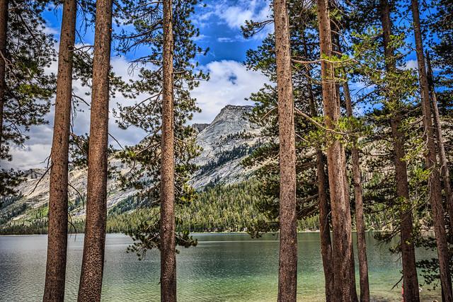 Tenaya Lake Through the Trees
