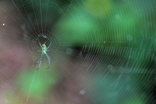 CrabAppleLane Spider - June 29, 2014