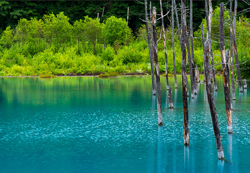 Blue Pond at South East Biei , Hokkaido