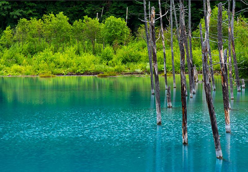 Blue Pond at South East Biei , Hokkaido