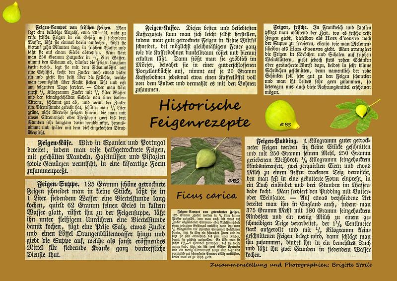 Feige Feigenrezepte Historische Feigenrezepte Zusammenstellung und Photographien Brigitte Stolle