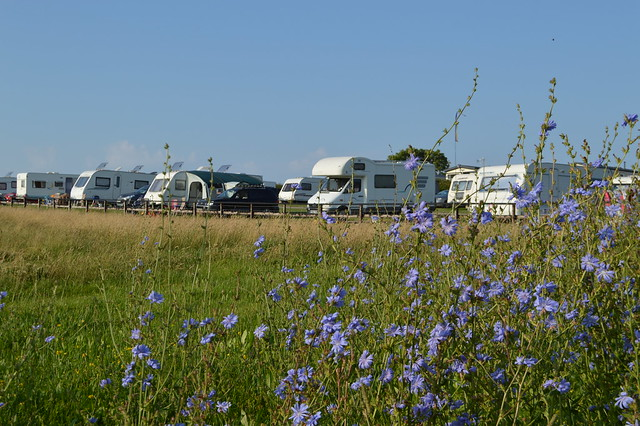photo of caravans in a field at Trevayne campsite