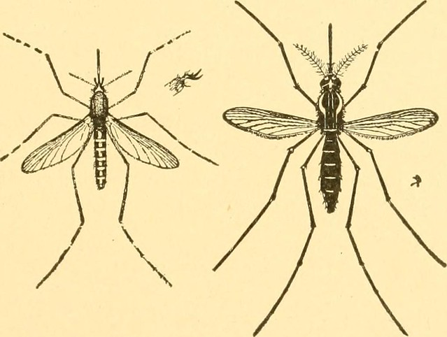 Background And Symptoms Of Yellow Fever 1793 - Lessons - Tes Teach