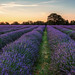Lavender Sunrise by RichardHurstPhotography