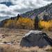 Boulder & Aspens