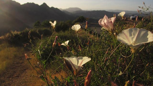 las flores horseshoe, Canon POWERSHOT ELPH 310 HS