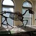 neohipparion leptode horse 02