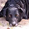 Odin's wolf eyes. #dogsofinstagram #wolfeyes #mixedbreed #thisismypack