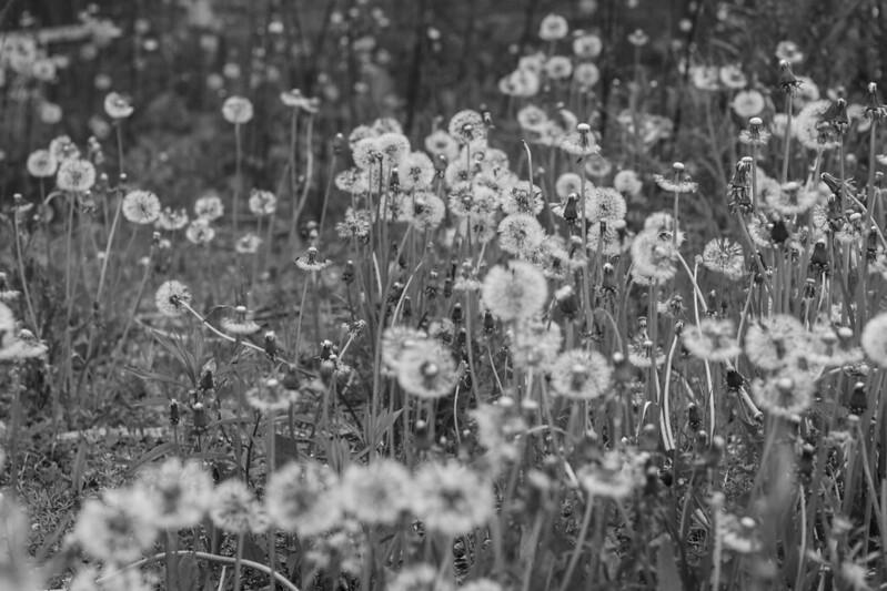 """120 / 365 """"wild flowers"""""""