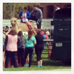Camel rides at college!