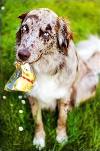 Triki naših psov 13948703156_28cea94634