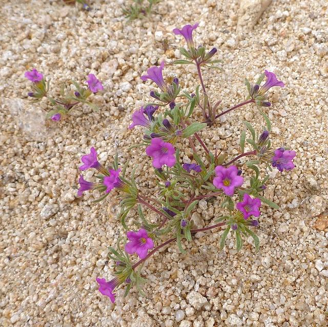 purplemat