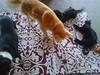 nueva alfombra testeada con entusiasmo por toda la familia