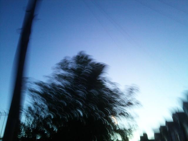 PIC_9029