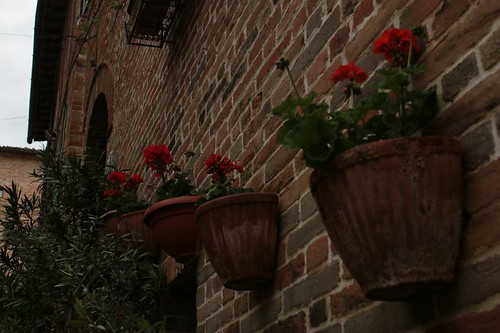 Sarnano: i fiori che ornano il paese