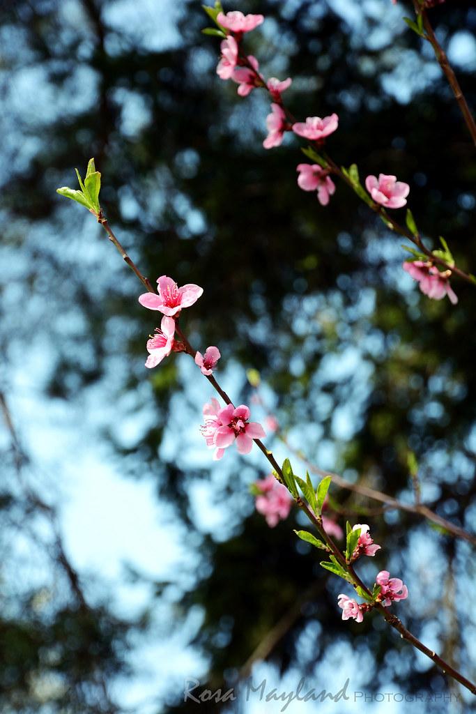 Spring In Veyrier