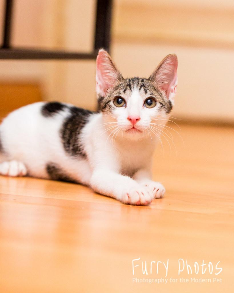 Love Kuching Project @luvkuching - kitten adoption, rescue, TNR ...