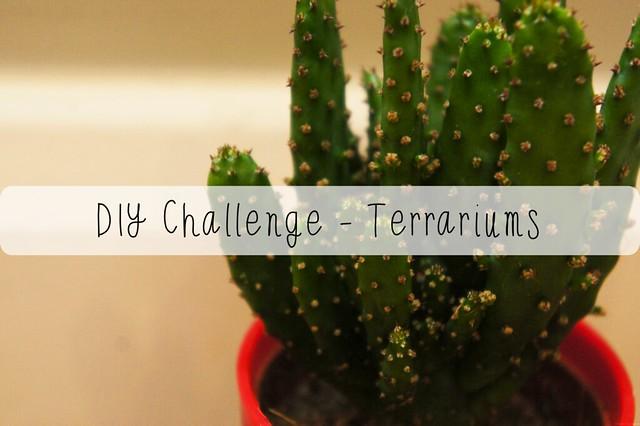 terrariums challenge title