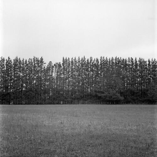 PFV_Trees2