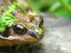 Frog + camo - IMG_0103