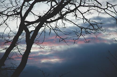 travel sunset tree silhouette clouds washington nikon dusk branches wa nikkor ridgefield d7000 nikond7000 18105mmf3556gedafsvrdx