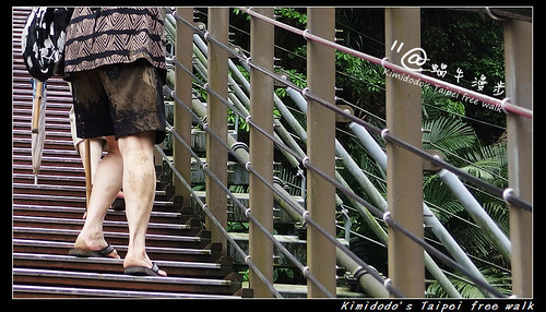 天梯 (15)