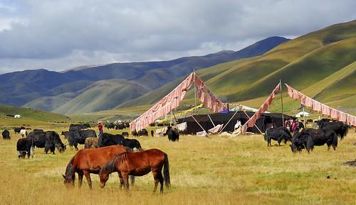 artisans nomades tibetains